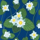 vector Naadloos patroon van witte lotusbloem Royalty-vrije Stock Afbeelding