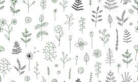 Vector naadloos patroon van zwart-witte bloemen, kruiden, installaties stock illustratie