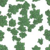 Vector Naadloos van Succulents royalty-vrije illustratie