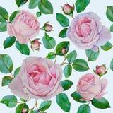 Vector nahtloses mit Blumenmuster mit Aquarellrosarosen Lizenzfreies Stockbild