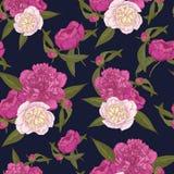 Vector nahtloses mit Blumenmuster mit Blumensträußen von Hand gezeichneten rosa und weißen Pfingstrosen auf dem dunkelblauen Hint Stockfotografie