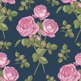 Vector nahtloses mit Blumenmuster mit Blumensträußen von rosa Rosen Lizenzfreie Stockfotografie