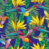 Vector nahtloses Muster mit Strelitzia reginae und buntem Fliegen Kolibri oder Colibri in der Konturnart auf dem blauen Hintergru Lizenzfreies Stockfoto