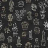 Vector nahtloses Muster von Kreide Kakteen und Succulents Stockbilder