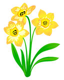 Vector narcissus, isolated on white. Vector narcissus. easter spring flowers isolated on white Royalty Free Illustration