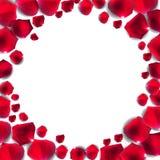 Vector natural abstracto I de Rose Petals Frame Background Realistic Fotografía de archivo libre de regalías