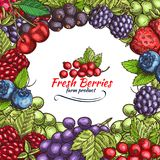Vector natural berries sketch poster Royalty Free Stock Photography