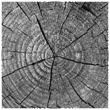 Vector natural illustration of engraving saw cut tree trunk. sketch of wood texture Stock Images
