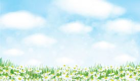 Vector  nature background. Vector  nature background, blue sky, green grass and chamomiles field stock illustration