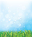 Vector nature background  blue sky and green grass Stock Photos