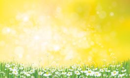 Vector daisy  flowers field. Vector nature  background, daisy  flowers field Stock Images