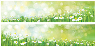 Vector nature backgrounds. Stock Images