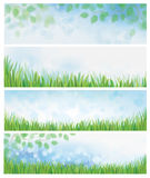 Vector nature backgrounds. Vector green leaves  and green grass  nature backgrounds Stock Photos