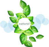 Vector nature banner Royalty Free Stock Image