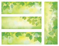 Vector nature banners, branch of birch tree with g Royalty Free Stock Image