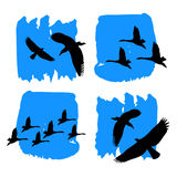 Vector nature illustration bird art design graphic animal style silhouette cute Stock Photos