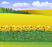 Vector nature illustration with grass, field of sunflowers and blue sky with clouds. World environments day. Royalty Free Stock Photos