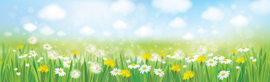 Vector nature  spring background. Stock Images