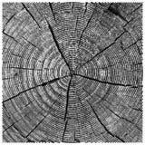 Vector natuurlijke illustratie van de boomstam van de de besnoeiingsboom van de gravurezaag schets van houten textuur Stock Afbeeldingen