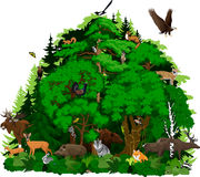 Vector north woodland forest with animals vector illustration