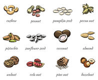 Vector nuts icons Royalty Free Stock Photo