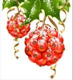 Vector o azevinho na forma de esferas do Natal Foto de Stock
