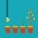 Vector o conceito do crescimento da árvore do dinheiro no estilo liso Fotos de Stock