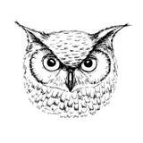 Vector o esboço da cabeça da coruja pela pena de esferográfica ilustração stock
