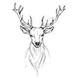 Vector o esboço pela opinião dianteira dos cervos nobres da pena ilustração do vetor
