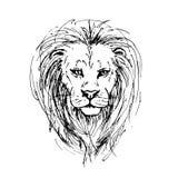 Vector o esboço pela pena de uma cabeça do leão ilustração royalty free