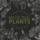 Vector o fundo com ervas médicas em um fundo preto Imagem de Stock