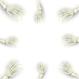 Vector o fundo com o braço de esqueleto para relativo à promoção, p de Dia das Bruxas Imagens de Stock