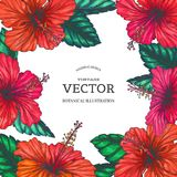 Vector o fundo do vintage com as flores tropicais vermelhas no branco BO Foto de Stock Royalty Free