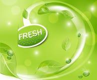 Vector o fundo fresco verde com folhas ilustração stock