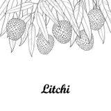 Vector o grupo com o lichi do esboço ou fruto chinês e folha do lichi isolado no fundo branco Árvore subtropical constante Fotografia de Stock