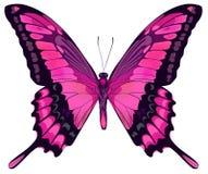 Borboleta cor-de-rosa bonita ilustração royalty free