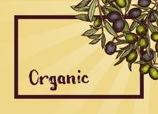 Vector o quadro com lugar para o texto e ramos de oliveira tirados mão ilustração stock
