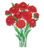 Vector o ramalhete com a flor vermelha do áster do esboço, folha verde ornamentado e botão isolados no fundo branco Áster do verm Ilustração Royalty Free