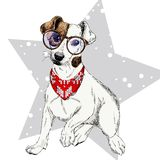 Vector o retrato do bandana e de vidros vestindo do inverno do cão do terrier de Jack Russel Isolado na neve da estrela Cor de Sk Fotografia de Stock