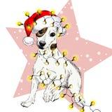 Vector o retrato do cão do terrier de Russel do jaque que veste o chapéu de Santa e ilumina a festão Isolado na estrela e na neve Fotos de Stock Royalty Free