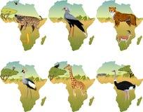 Vector o savana africano com pássaro de secretário, o guindaste coroado, o hyenna, a cobra, a chita, a gazela, o girafa e os anim Imagens de Stock
