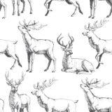 Vector o teste padrão sem emenda com os cervos tirados mão da floresta Fundo Foto de Stock Royalty Free