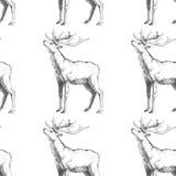 Vector o teste padrão sem emenda com os cervos tirados mão da floresta Fundo Fotografia de Stock