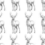 Vector o teste padrão sem emenda com os cervos tirados mão da floresta Fundo Imagens de Stock Royalty Free