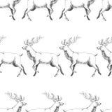 Vector o teste padrão sem emenda com os cervos tirados mão da floresta Fundo Foto de Stock