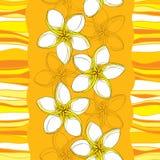 Vector o teste padrão sem emenda com a flor do Plumeria ou do Frangipani no amarelo e as listras no fundo alaranjado Fotografia de Stock Royalty Free
