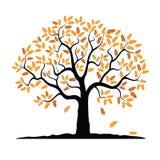 Vector oak tree in autumn. Vector Oak Tree. Illustration of Autumn Stock Image