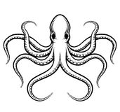 Vector octopus illustration Royalty Free Stock Image