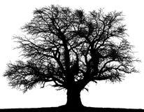 Vector old big black tree. vector illustration