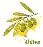 Vector olive Royalty Free Stock Images